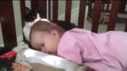 Cute Little Kitten And Sleeping Baby