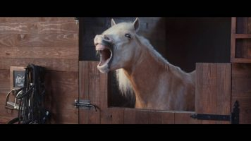 Volkswagen Commercial – Horses Laugh Hysterically