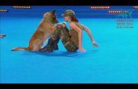 Amazing Dog Dance Championship