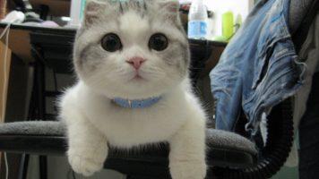 Hilarious Cat Fails Compilation