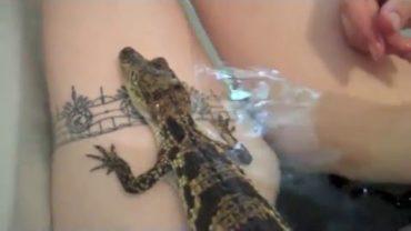 Daring Girl Taking Bath With Crocodile