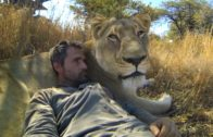Lions – The New Endangered Species?