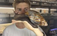 The Biggest Snail You Will Ever See