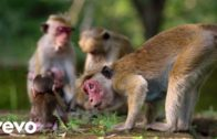 """Its Our World (From Disneynature's """"Monkey Kingdom"""")"""