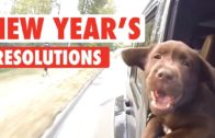 Amazing New Year Resolutions Of Pets